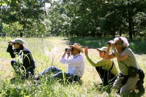 Birdwatching at the 2015 Spring Birding Weekend